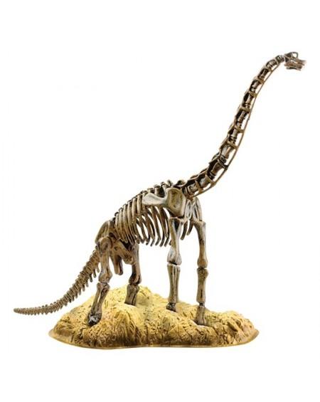 Βραχιόσυρος Σκελετός