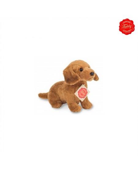 Duchshund Sitting Brown